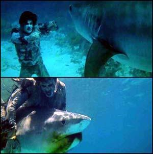 Zombie vs Shark